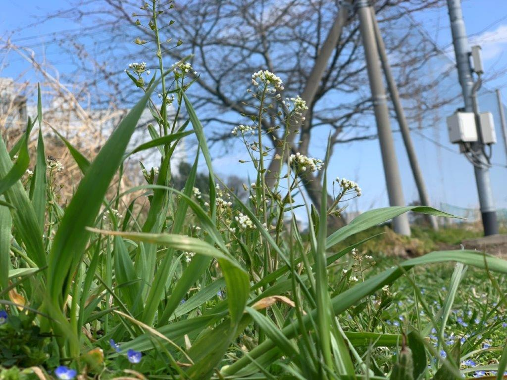小さな春の花